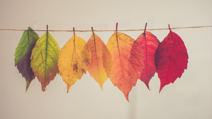Multi color leaves hanging on string, showing culture transformation